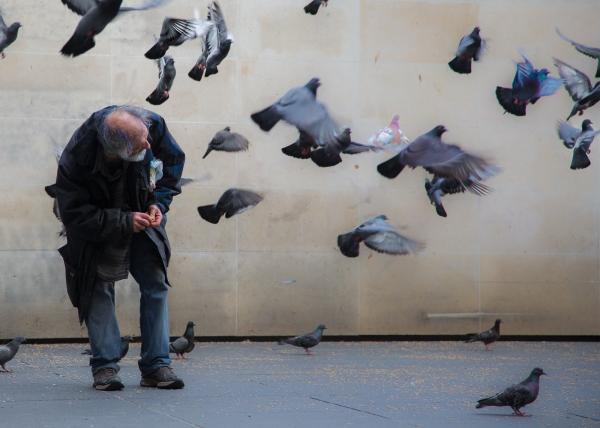 The Old Birdman -