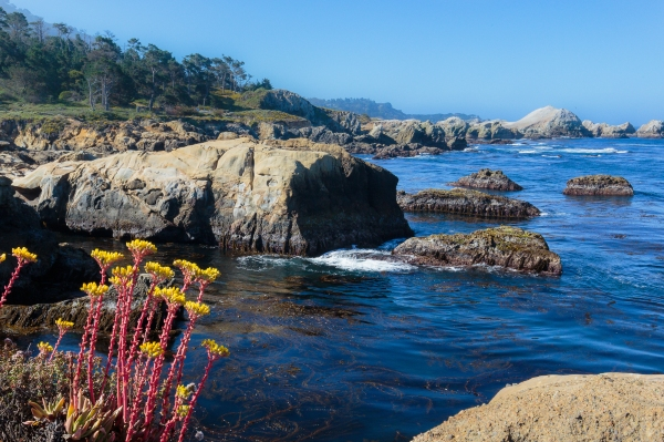 Point Lobos, Second Morning,