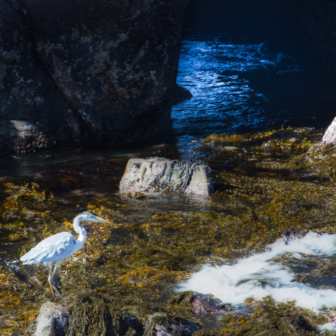 Point Lobos, Second Morning