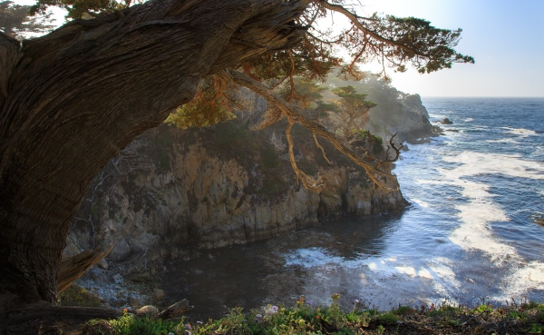 Evening, Point Lobos, Cypress Cove