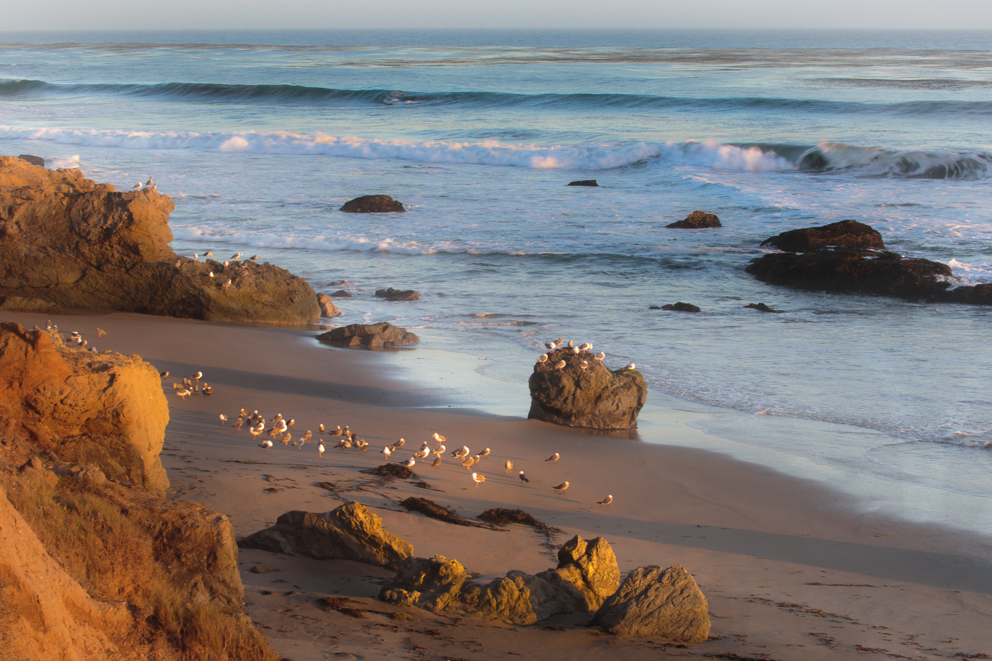Elephant Seals to San Simeon to Moonstone,  Cambia