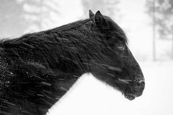 horses-011017g-copy