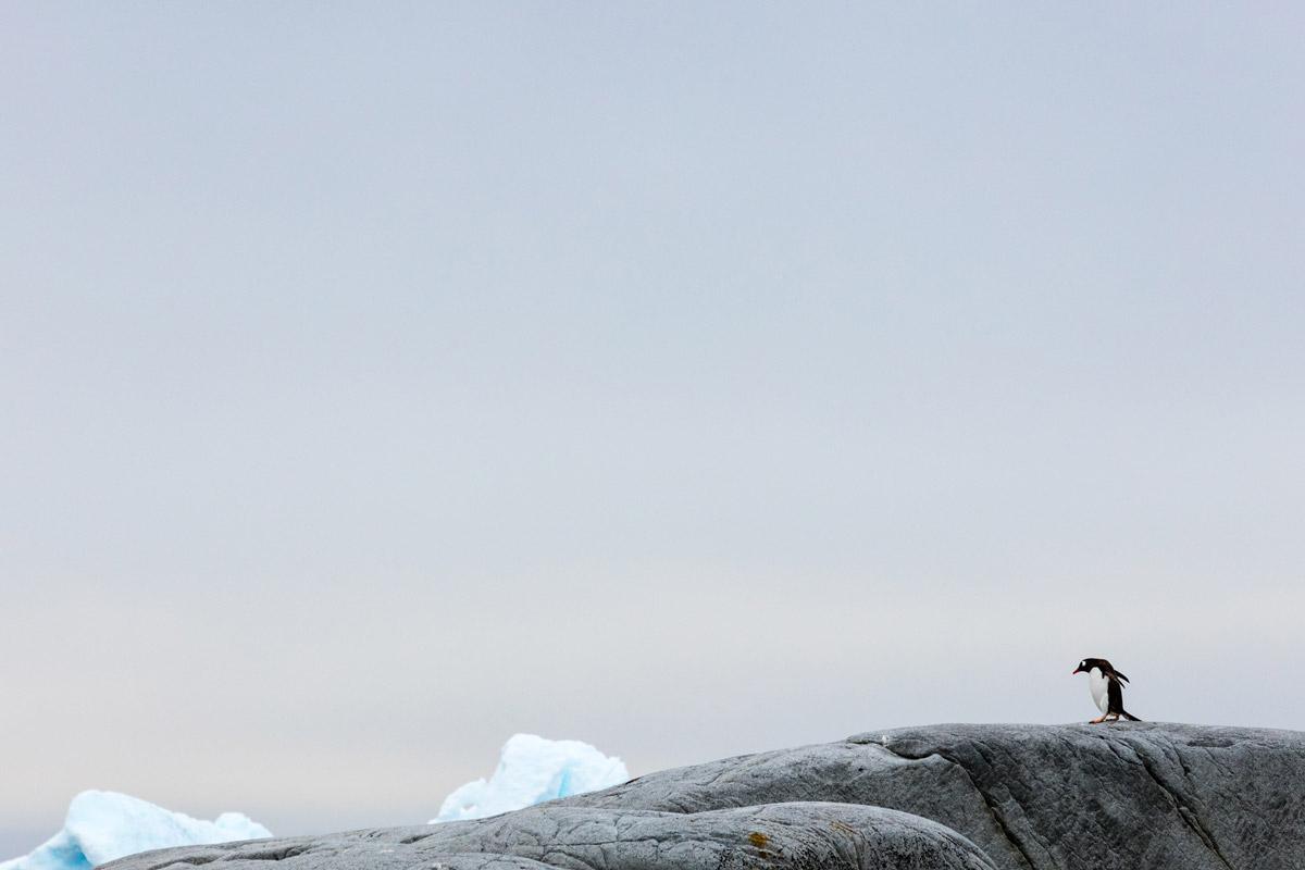 Antartica3